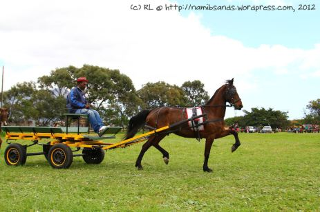 Miss Jay (1075) wins the prize for Best Working Mare