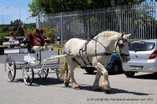 One of the beautiful Percheron-drawn carts