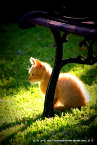 A little ginger kitty-cat comes to visit our garden