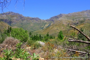 On our circular drive back to the entrance, we look across the river valley to the Swartboskloof