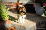 Miss Tuffy-Cat inspects the garden
