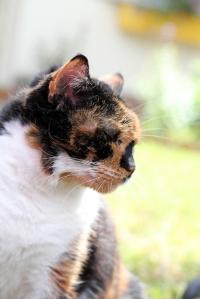 Tuffy-Cat