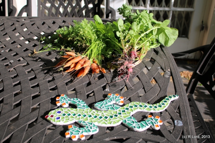 Our crop of carrots and radish - with the new mosaic gecko for scale