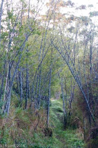 Narrow footpath inviting exploration