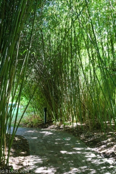 Bamboo-lined pathway