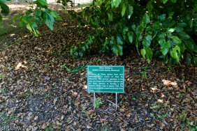 Mulberry tree sign