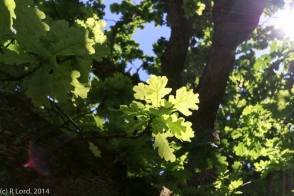 The sun is filtered by the leaves