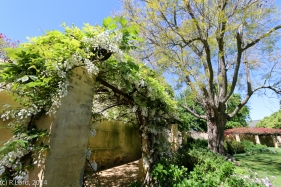 Arched walkway overgrowth with flowering creepers